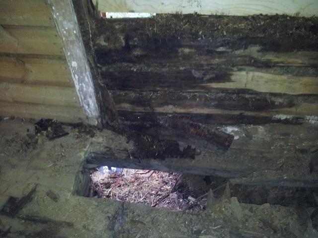 Vilken Röta! Fy! Allt mellan golv och tak fick rivas.